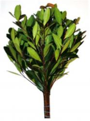 Bay Leaf Branches 10/bag